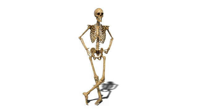 Funny skeleton standing and smiling, human skeleton isolated on white background, 3D rendering